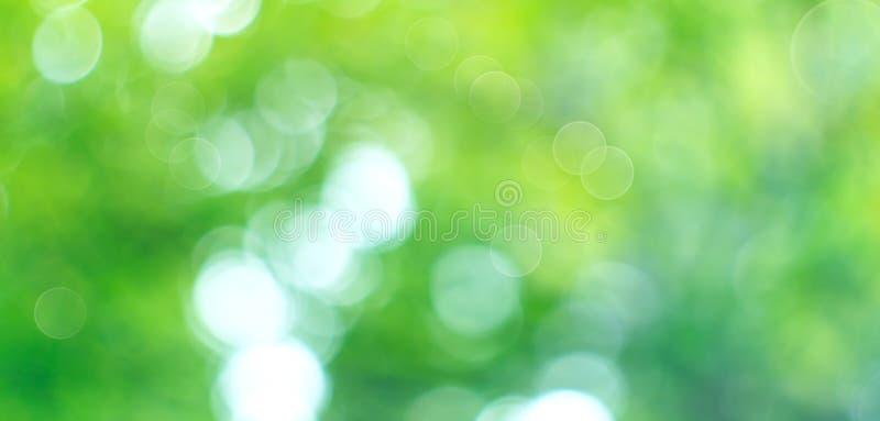Красивым предпосылка природы запачканная конспектом Фон bokeh зеленого цвета лета стоковое изображение rf