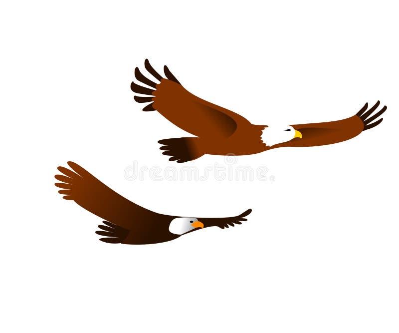2 красивых американских орла летая на белую предпосылку стоковые изображения