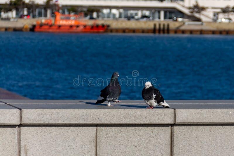 2 красивых голубя на предпосылке моря стоковое фото