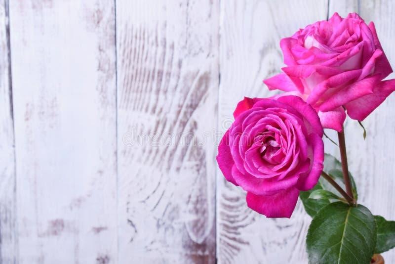 2 красивых розовых розы против белой деревянной предпосылки стоковое фото