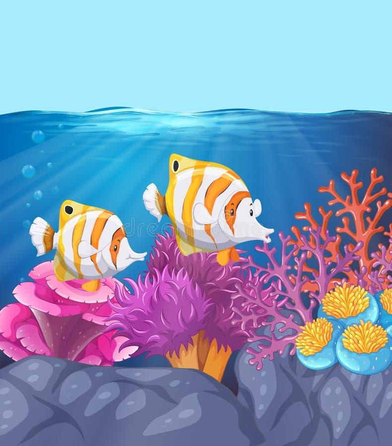 2 красивых рыбы подводной иллюстрация вектора