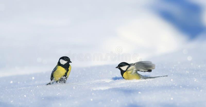 2 красивых синицы идут на белые смещения снега в парк стоковая фотография