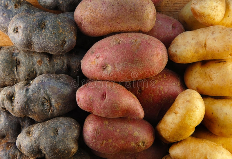 красит картошки 3 fingerling стоковое изображение rf