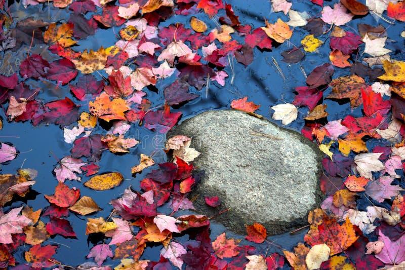 красит листво падения стоковые фотографии rf