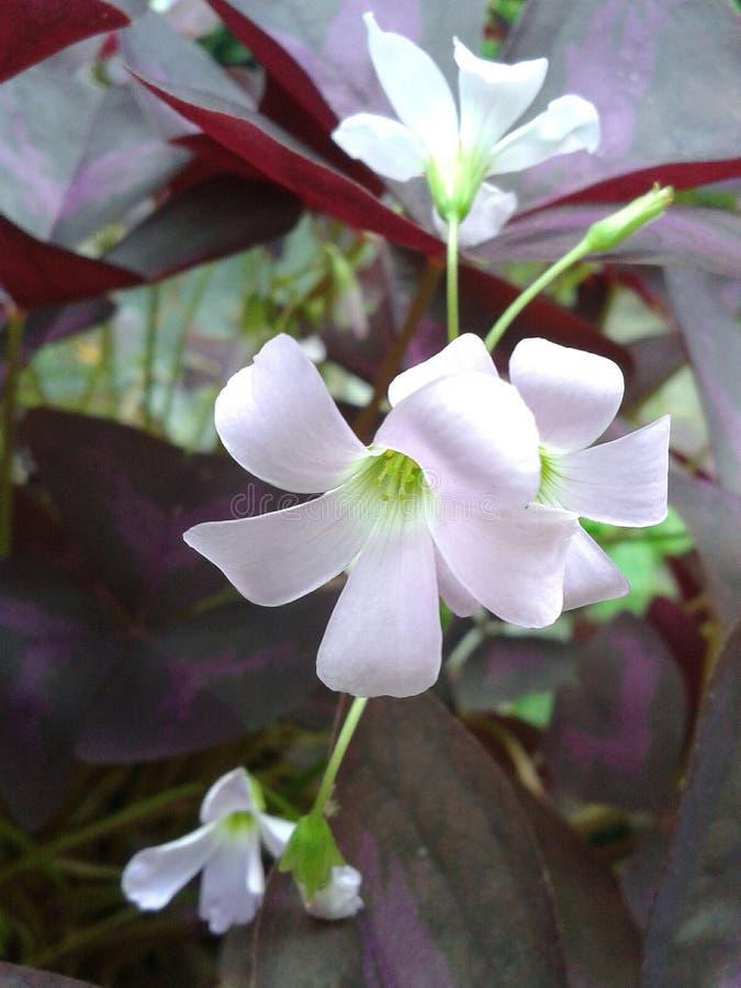 красит сад цветков соединено стоковая фотография rf