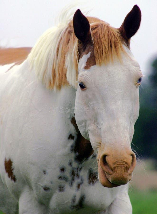 краска микстуры лошади шлема стоковое фото
