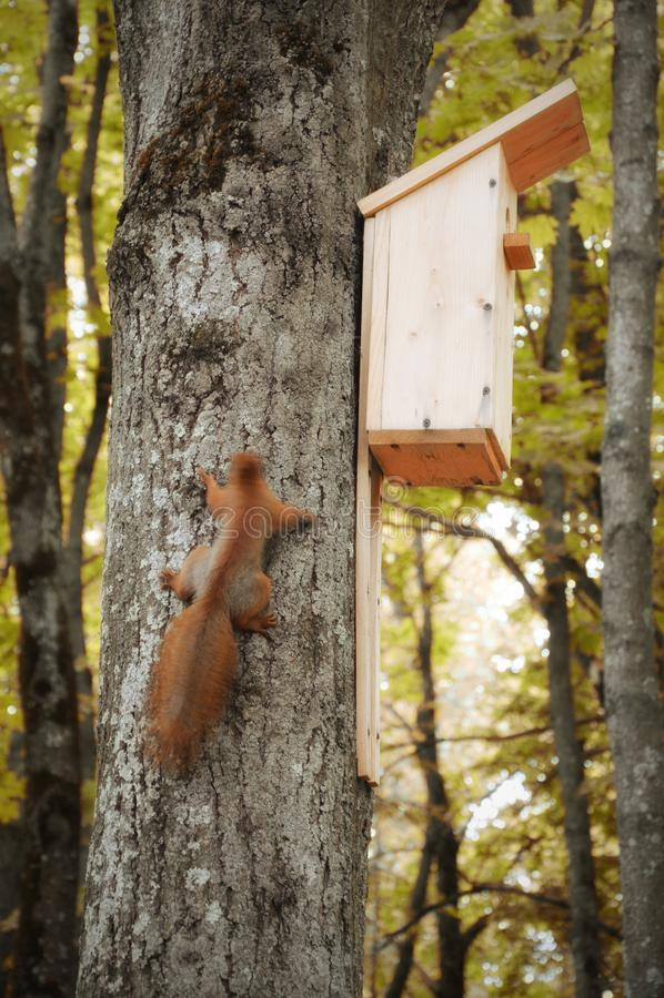 Красная белка в дереве environment территория парка стоковое фото