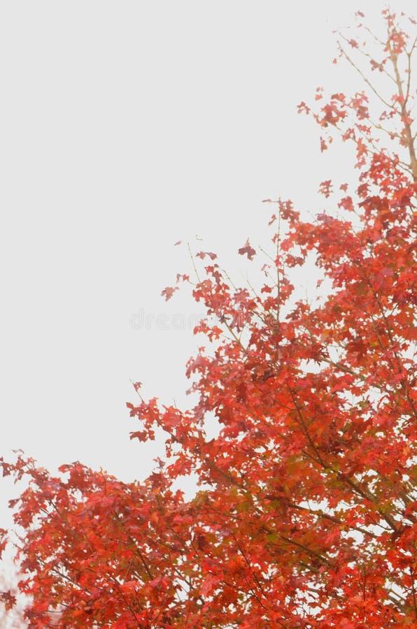 красная белизна стоковое фото