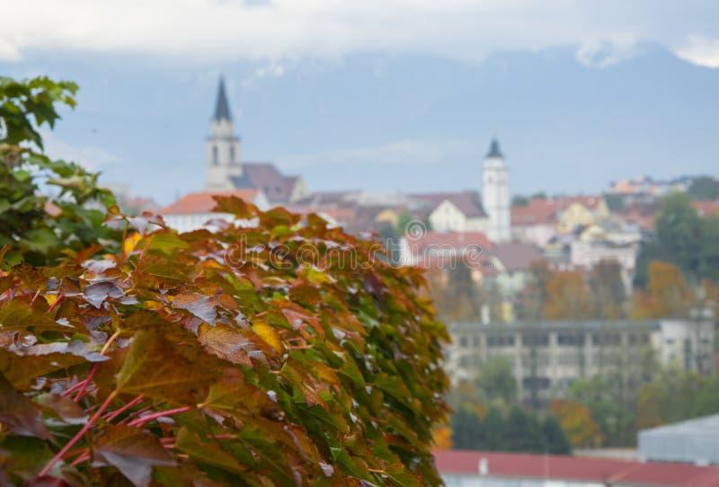 Красная виноградина выходит с взглядом панорамы Kranj, Словении стоковая фотография rf