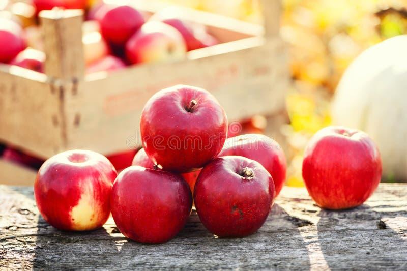 Красная группа в составе яблоки формирует сбор осени золотой стоковая фотография rf