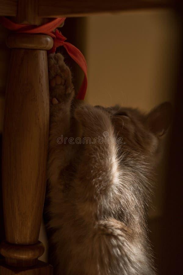 Красная игра кота с лентой стоковое изображение rf