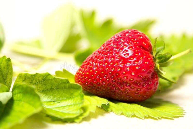Красная и зрелая клубника в листьях на белой предпосылке стоковая фотография rf
