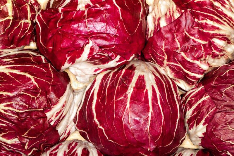 Красная капуста стоковые фотографии rf