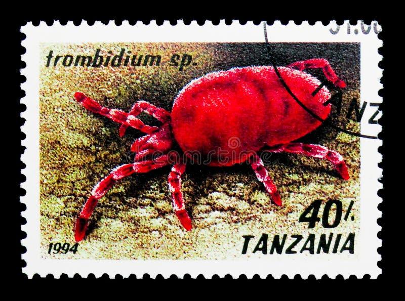Красная лепта бархата (sp Trombidium ), serie паукообразные, около 1994 стоковая фотография
