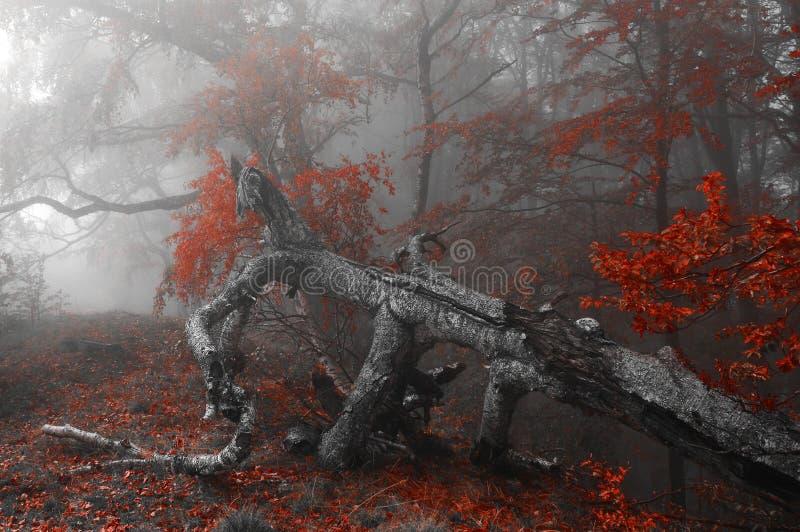 Красная осень forrest стоковое изображение rf