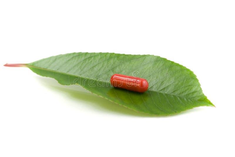 Красная пилюлька над зелеными листьями стоковая фотография