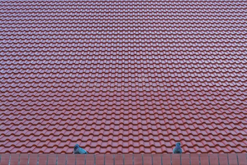 красная плитка крыш стоковая фотография rf