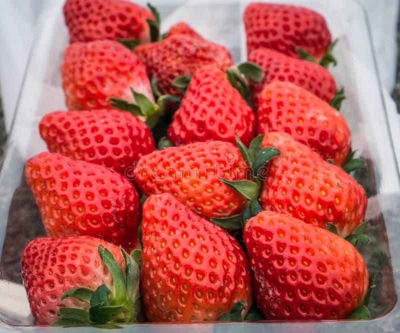 Красная предпосылка ягод клубники Клубники ягод свежее сочного и яркой упаковали в прозрачных подносах для продажи и transpo стоковое изображение rf