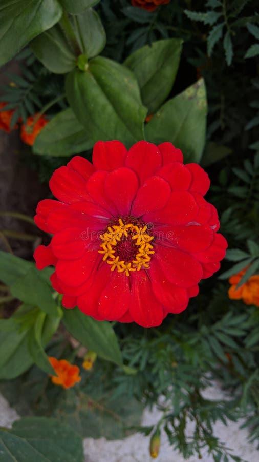 красная природа леса цветка стоковые фото
