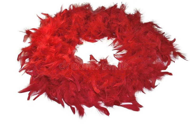 Красная пушистая горжетка пера на белой предпосылке стоковое фото