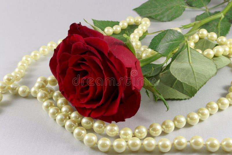 Красная роза и жемчуга на белой предпосылке стоковая фотография rf