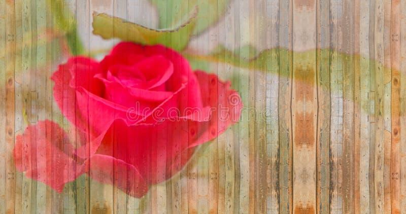 Красная роза на винтажной деревянной концепции валентинки предпосылки стоковая фотография