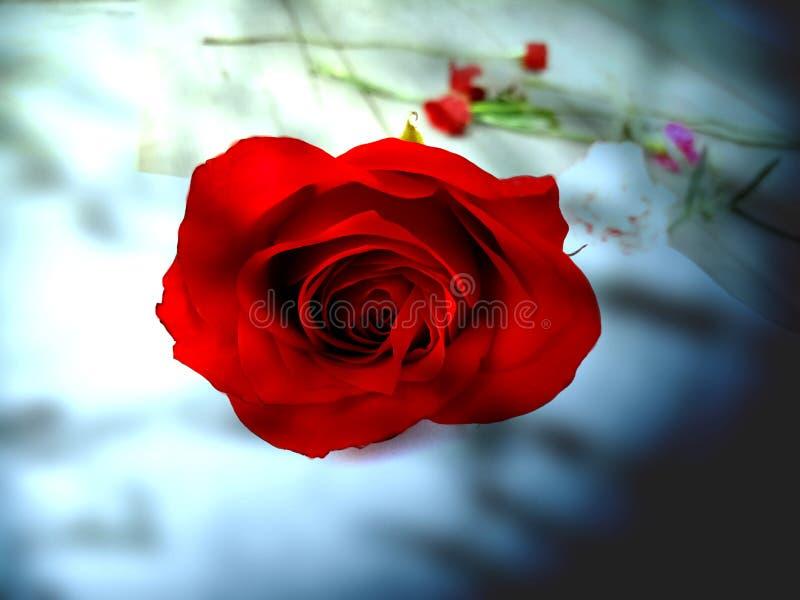 Красная роза на дизайне предпосылки нерезкости нерезкости абстрактном, красочной запачканной затеняемой предпосылке, яркой иллюст стоковые фото
