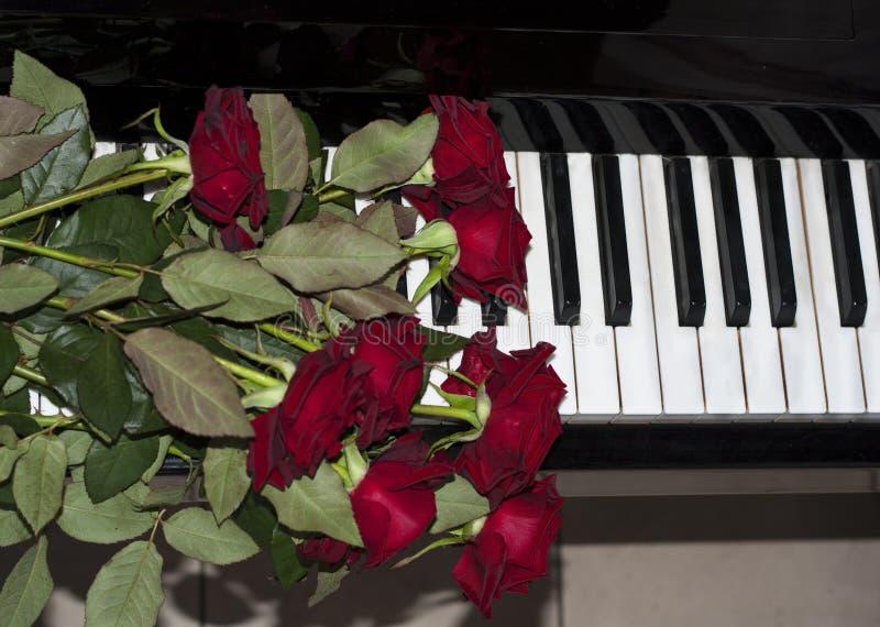 Красная роза на клавиатуре рояля стоковое изображение rf
