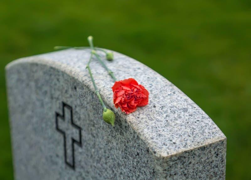 Красная роза на надгробной плите стоковая фотография rf