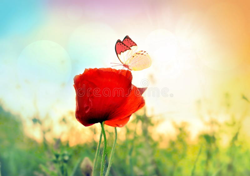 Красная роза с бабочкой на луге стоковое изображение rf