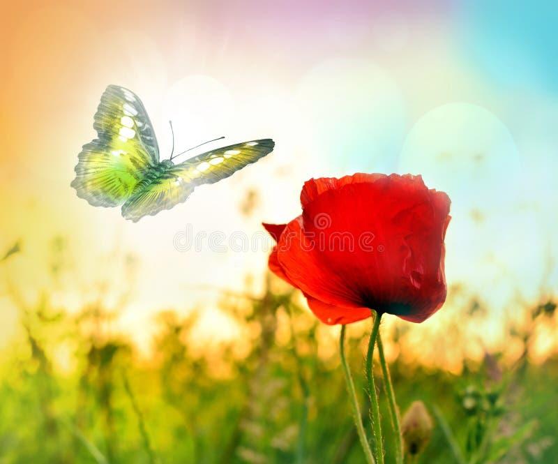 Красная роза с бабочкой на луге стоковое фото