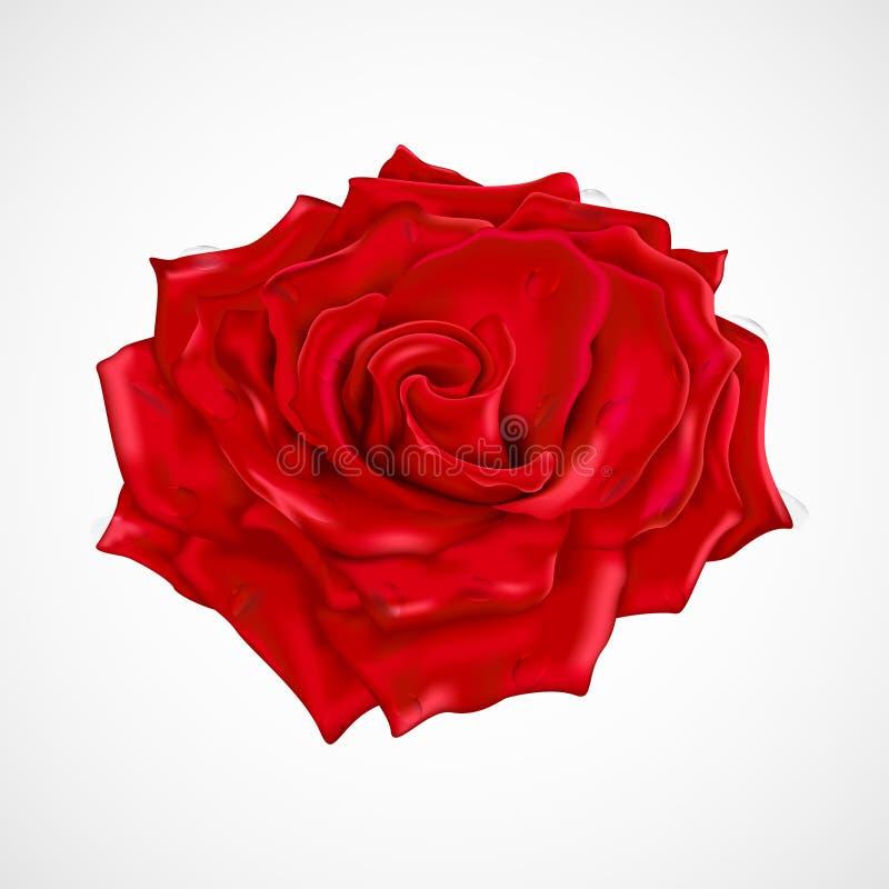 Красная роза с падениями росы иллюстрация штока