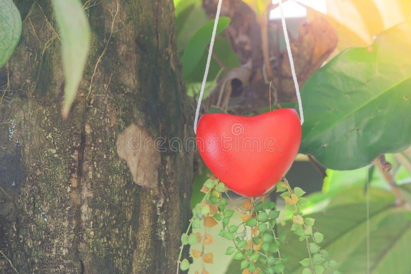 Красная смертная казнь через повешение формы сердца вешалки на зеленом дереве с предпосылкой солнечного света в винтажном стиле с стоковая фотография rf