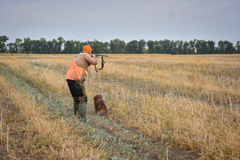 Красная собака ирландского сеттера в поле Укажите звероловство хода птицы стоковые изображения rf