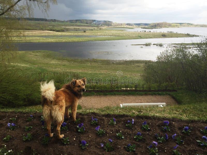 Красная собака и ландшафт перед дождем стоковые изображения rf