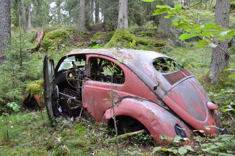 Парковать в древесине стоковые фото