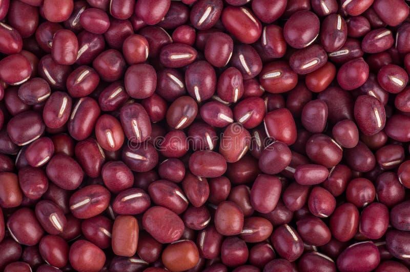 Красная фасоль Adzuki стоковое изображение
