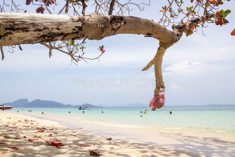 Красная шляпа на дереве на пляже стоковые фотографии rf