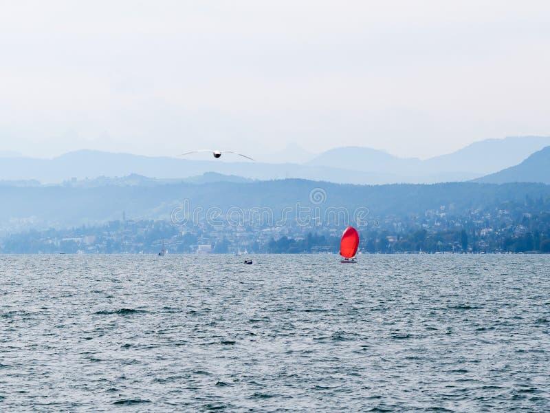 Download Красное ветрило на озере Цюрих Стоковое Фото - изображение насчитывающей гора, zurich: 81803360