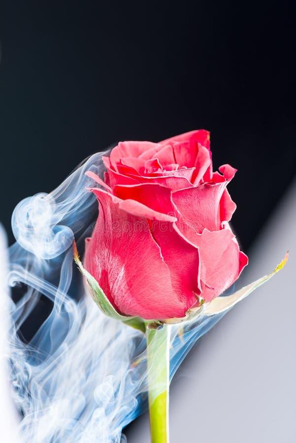 Красное красивое, который замерли с жидким азотом подняло на черное backgrou стоковое фото
