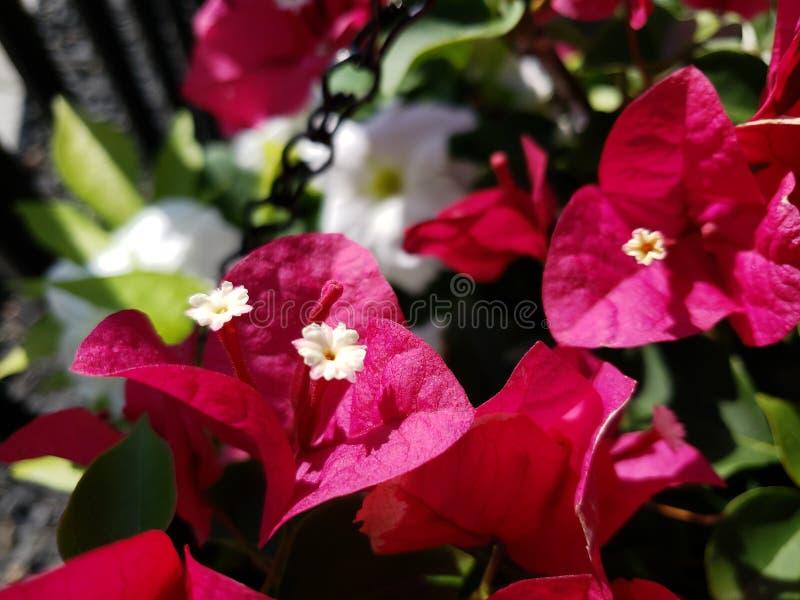 красное лето стоковые изображения