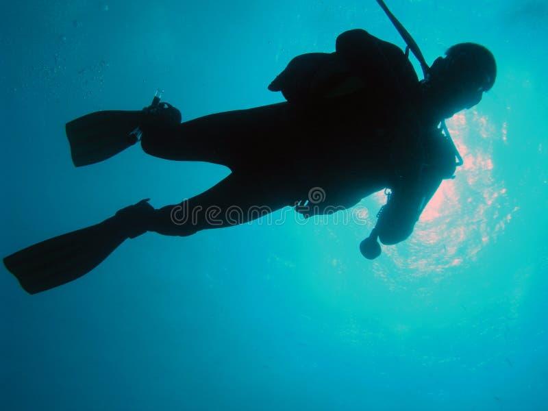 Красное Море водолаза стоковые фотографии rf