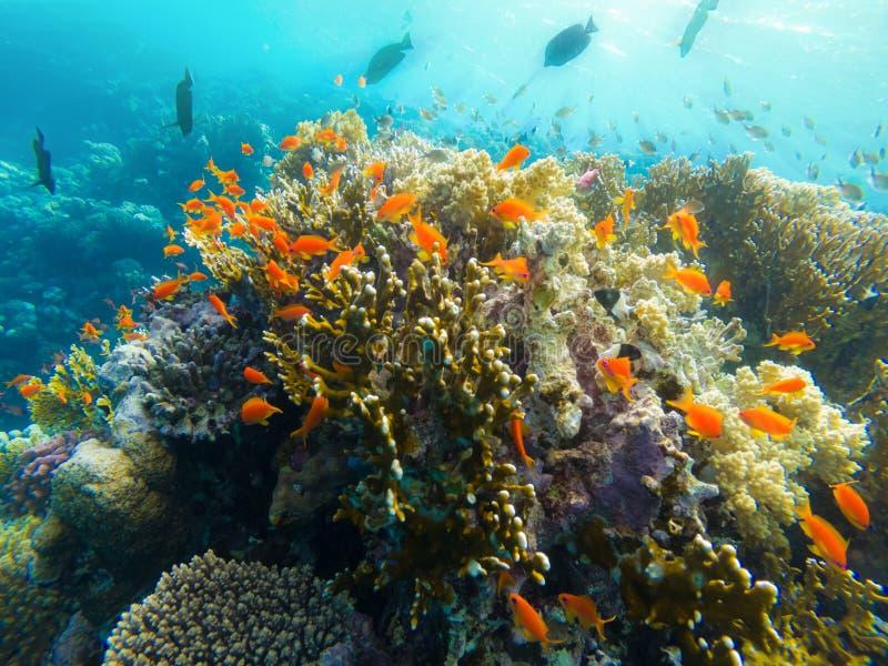 Красное Море Египет Marsa Alam кораллового рифа стоковое изображение rf