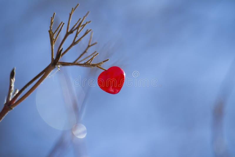 Красное сердце на ветви дерева стоковое изображение rf