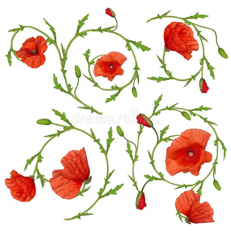 Красное собрание элементов орнамента цветка мака на белизне стоковое изображение rf