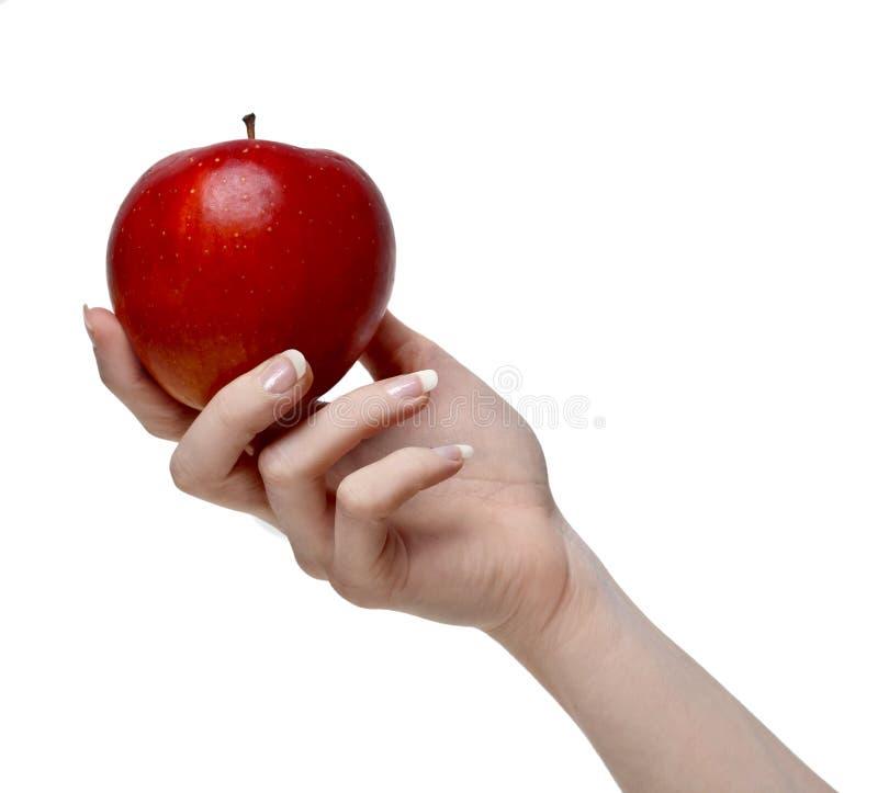 Красное яблоко в красивой руке стоковые фото
