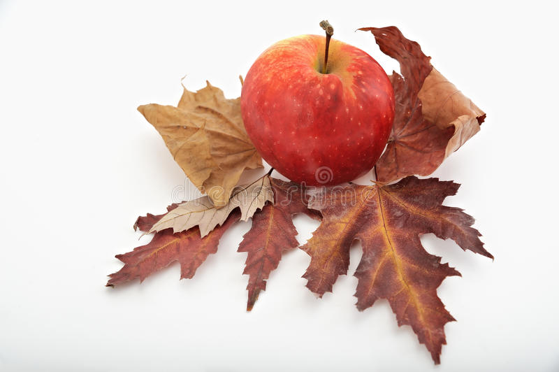 Красное яблоко на листьях осени стоковая фотография rf