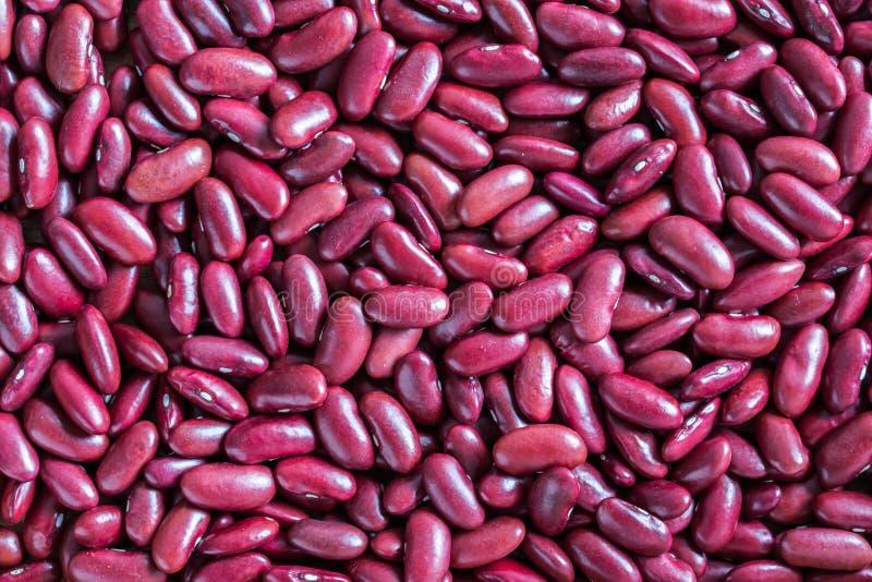 Красное backgroun фасоли почки стоковая фотография