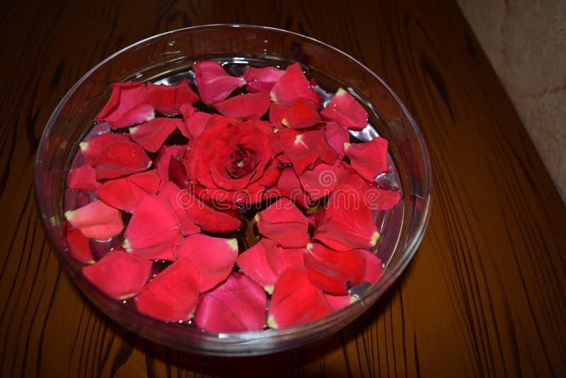 Красное Rosepetals в водоналивном шаре стоковые изображения
