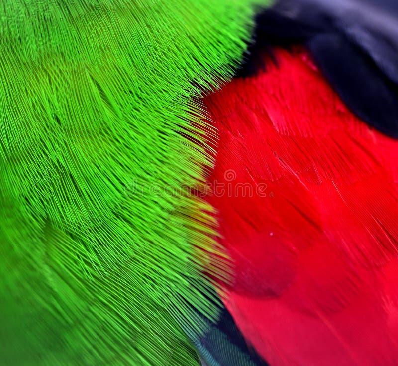 Красно-, который подогнали пер попугая стоковые изображения